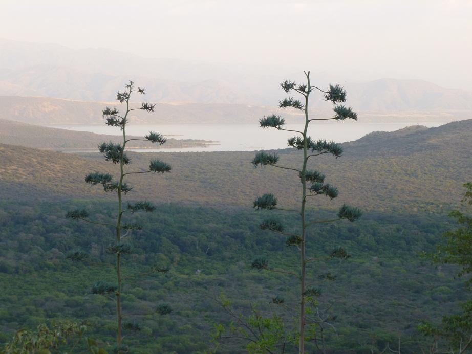 lake Abiya