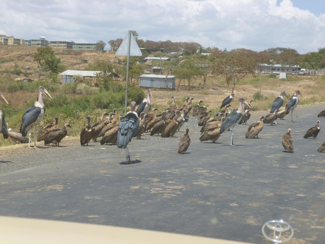 vultures & storks